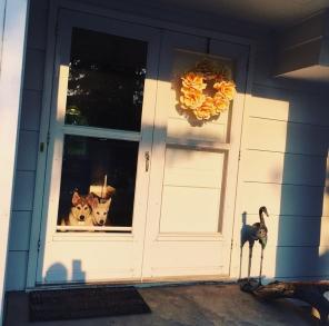 Front door with puppies